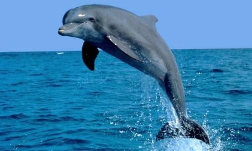 Características-del-delfín